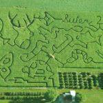 2001 Suter Corn Maze